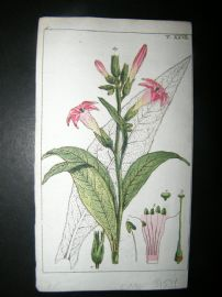 Wilhelm C1790's H/Col Botanical Print. Virginian Tobacco, Nicotiana tabacum 6-27